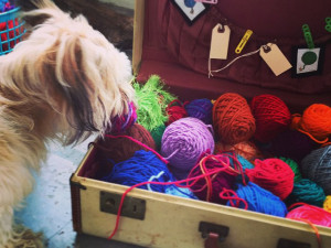 Yarn Loving Dog