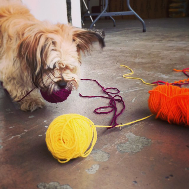 Yarn-loving dog
